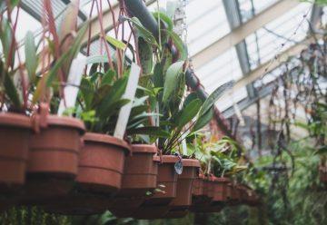 rodzaje etykiet ogrodnictwo